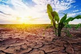 خشکسالی و مهمترین راهکارهای آبیاری باغات